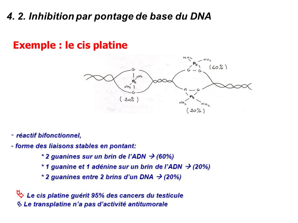 4. 2. Inhibition par pontage de base du DNA