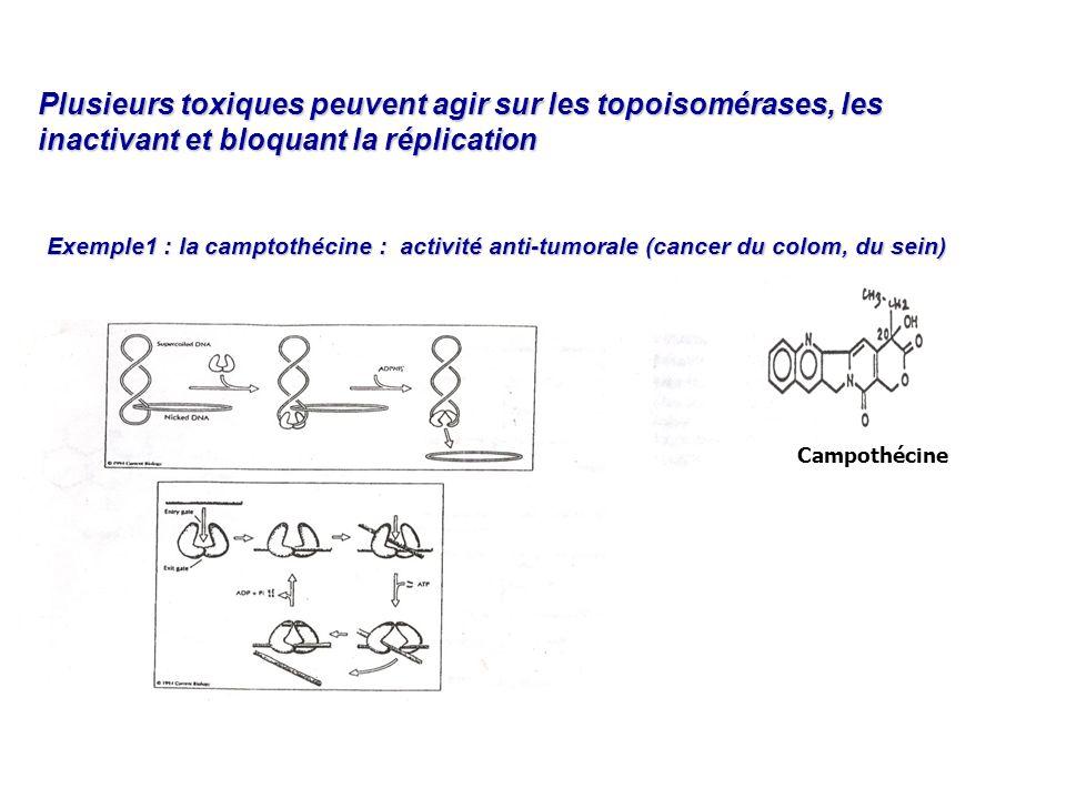Plusieurs toxiques peuvent agir sur les topoisomérases, les inactivant et bloquant la réplication