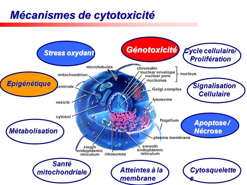 Mécanismes de cytotoxicité