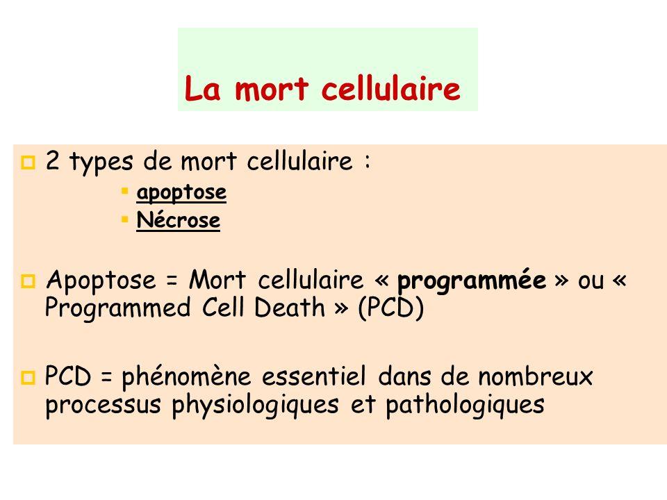 La mort cellulaire 2 types de mort cellulaire :