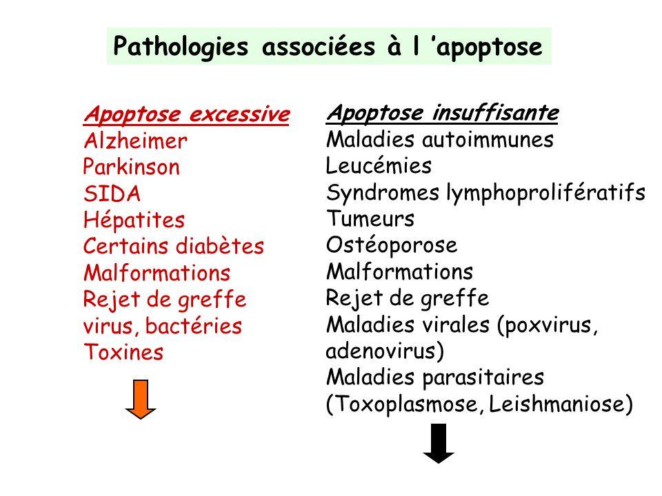 Pathologies associées à l 'apoptose