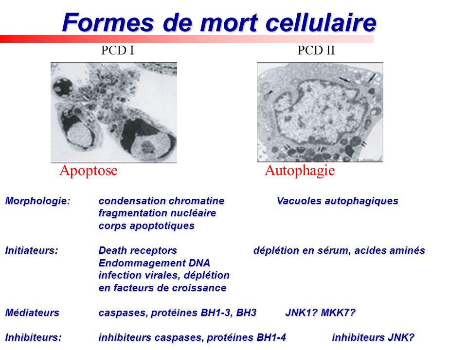 Formes de mort cellulaire