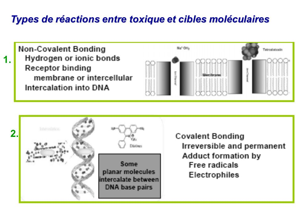 Types de réactions entre toxique et cibles moléculaires