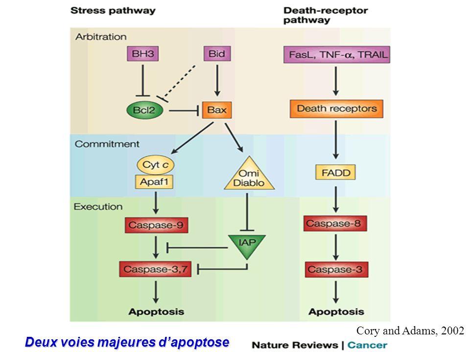 Deux voies majeures d'apoptose