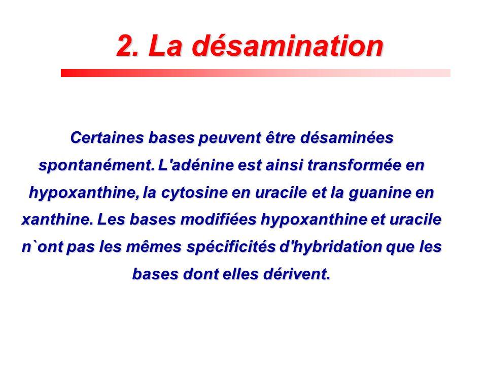 2. La désamination