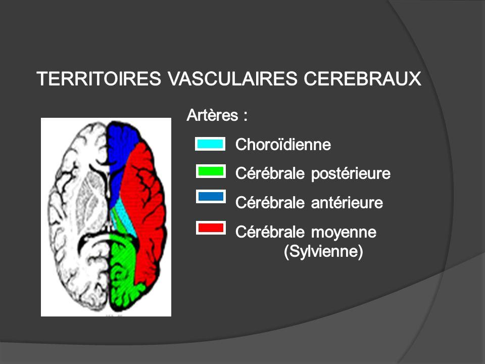 TERRITOIRES VASCULAIRES CEREBRAUX