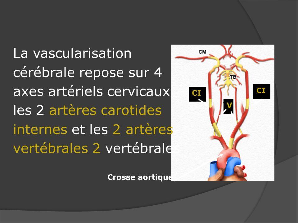 La vascularisation cérébrale repose sur 4 axes artériels cervicaux les 2 artères carotides internes et les 2 artères vertébrales 2 vertébrales