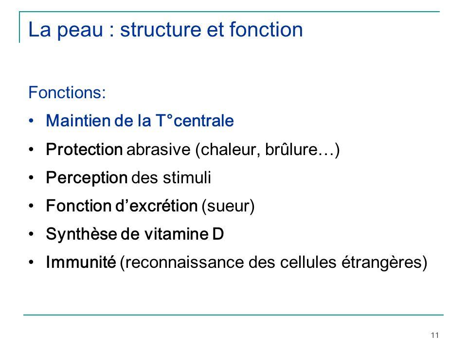 La peau : structure et fonction