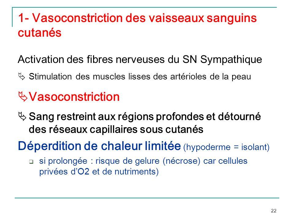 1- Vasoconstriction des vaisseaux sanguins cutanés