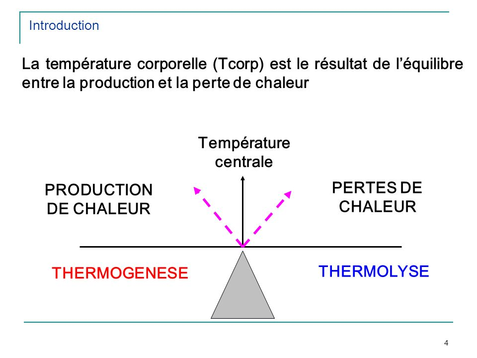 Température centrale PRODUCTION DE CHALEUR PERTES DE CHALEUR