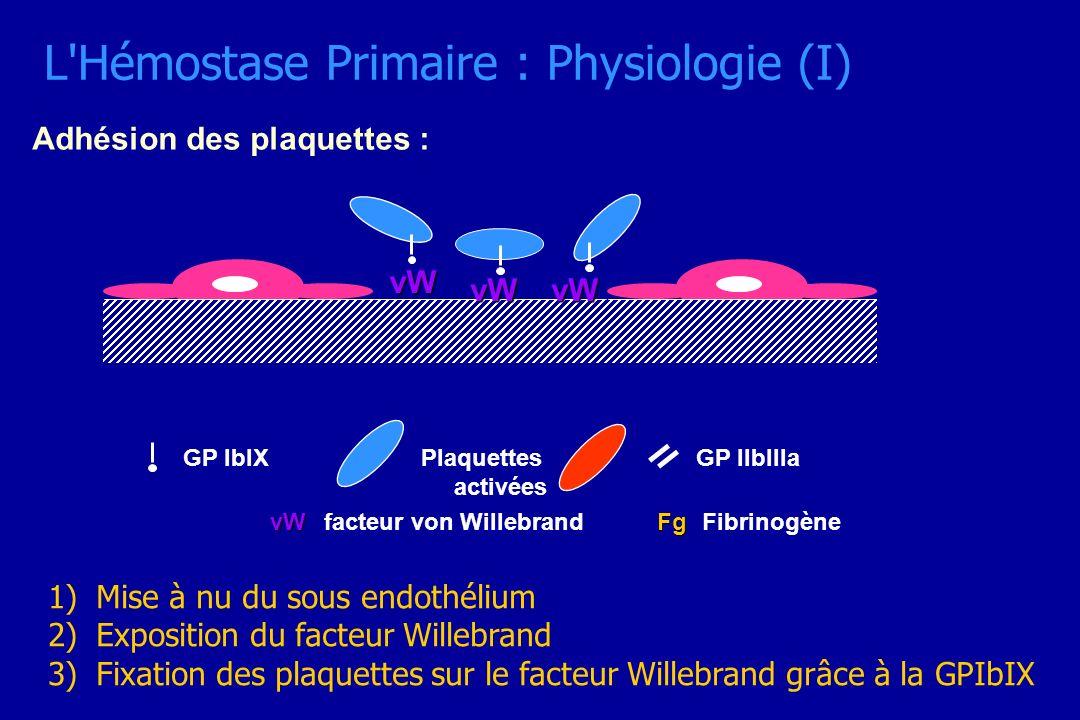 L Hémostase Primaire : Physiologie (I)