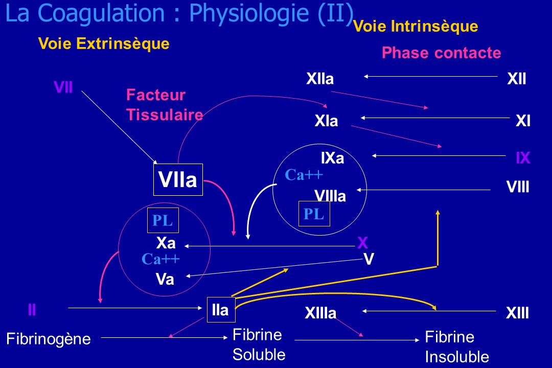 La Coagulation : Physiologie (II)