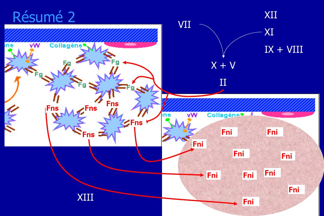 Résumé 2 XII XI VII IX + VIII X + V II XIII Fns Fns Fns Fns Fni Fni