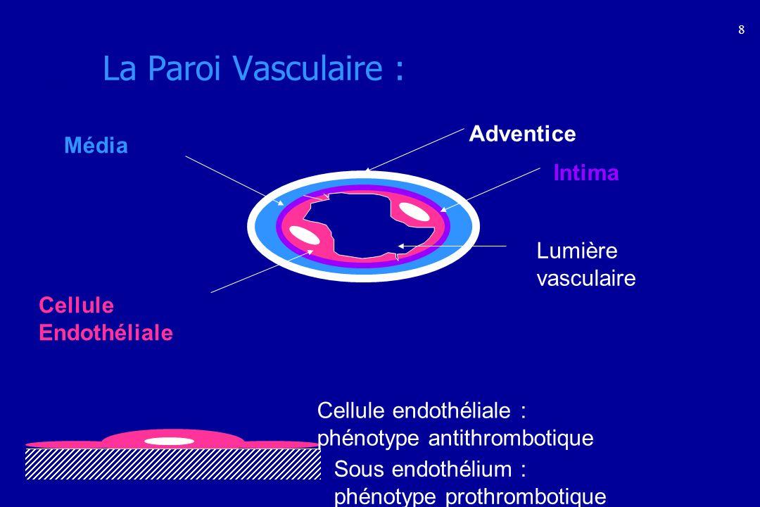 La Paroi Vasculaire : Adventice Média Intima Lumière vasculaire