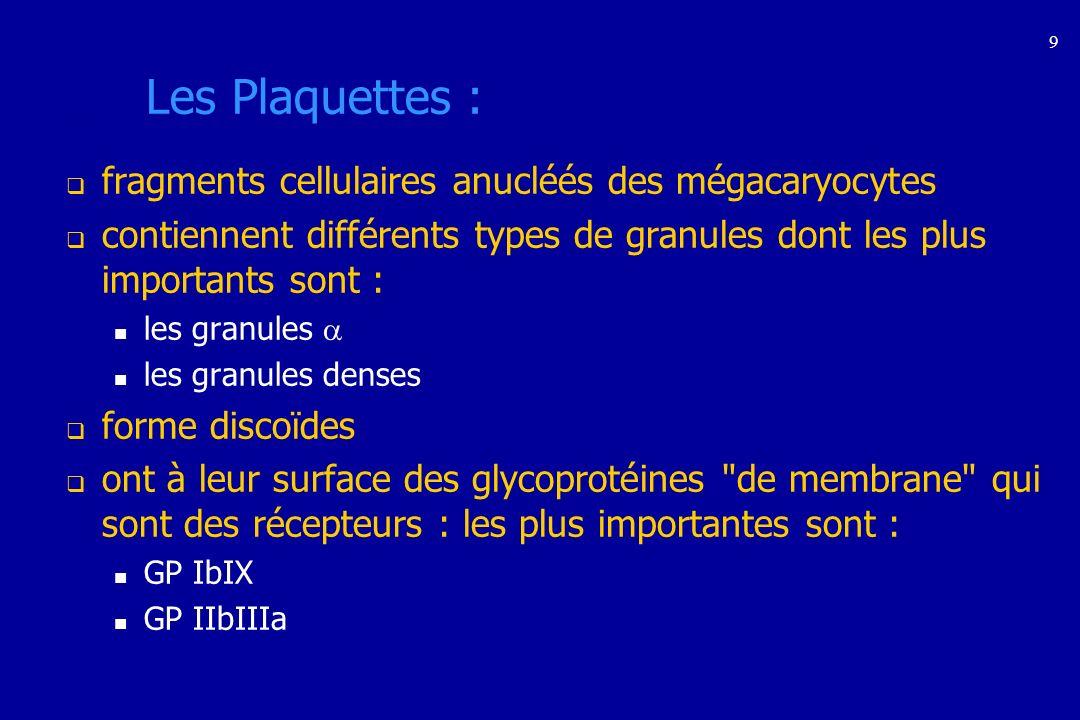Les Plaquettes : fragments cellulaires anucléés des mégacaryocytes