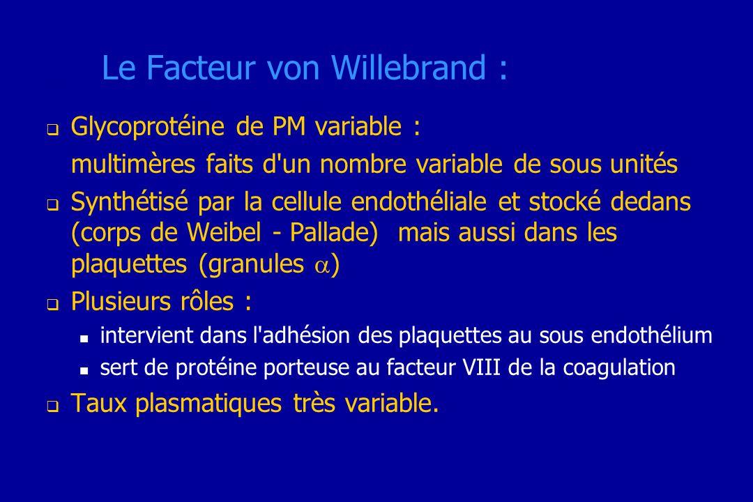 Le Facteur von Willebrand :