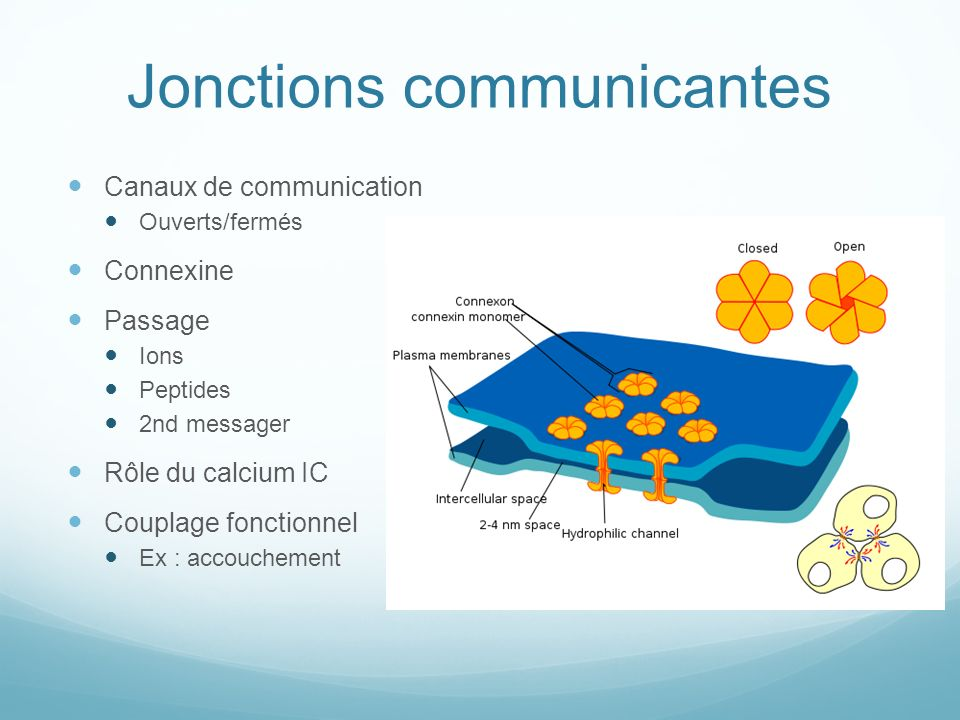 Jonctions communicantes