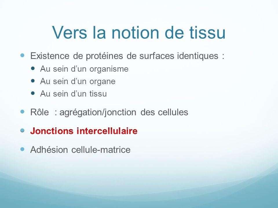 Vers la notion de tissu Existence de protéines de surfaces identiques : Au sein d'un organisme. Au sein d'un organe.