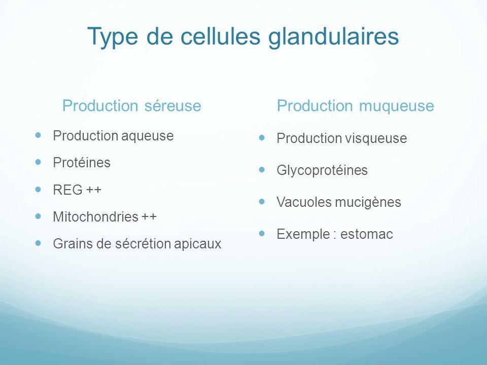 Type de cellules glandulaires