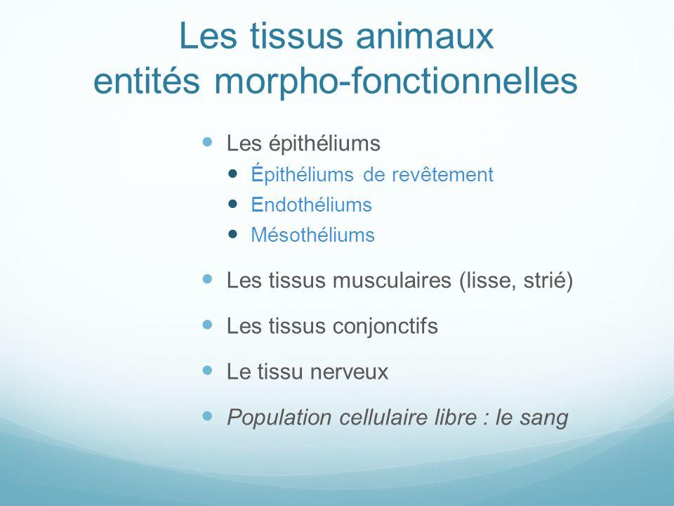 Les tissus animaux entités morpho-fonctionnelles