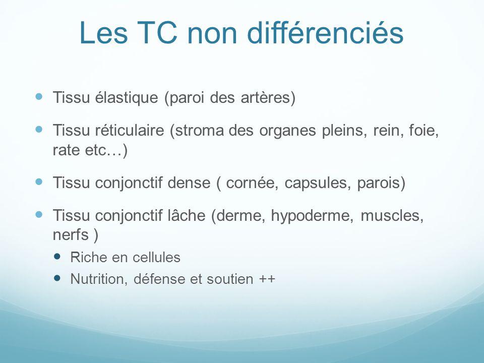 Les TC non différenciés