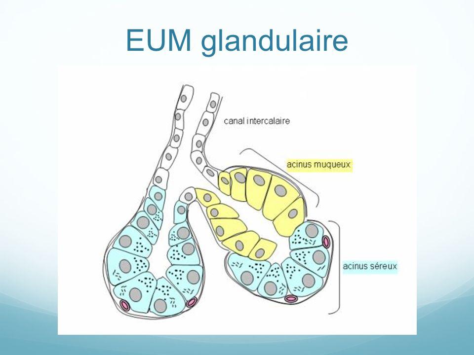 EUM glandulaire