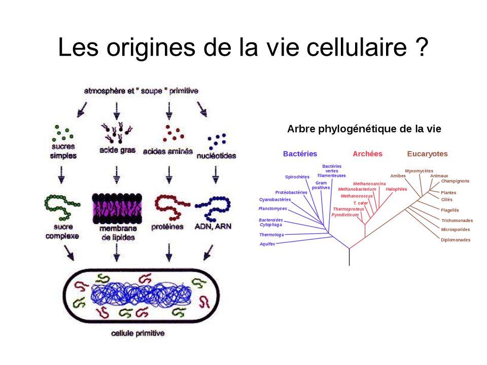 Les origines de la vie cellulaire