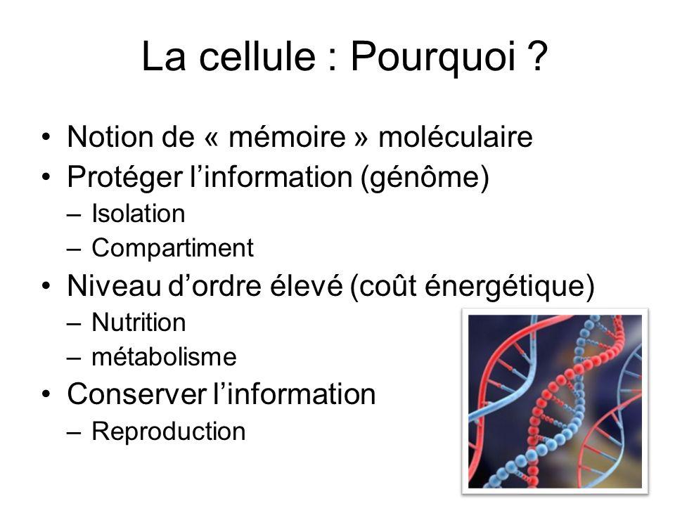 La cellule : Pourquoi Notion de « mémoire » moléculaire