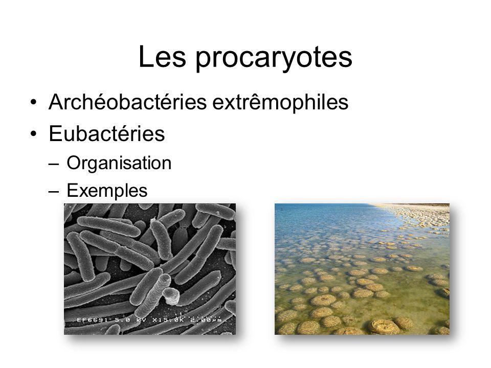 Les procaryotes Archéobactéries extrêmophiles Eubactéries Organisation