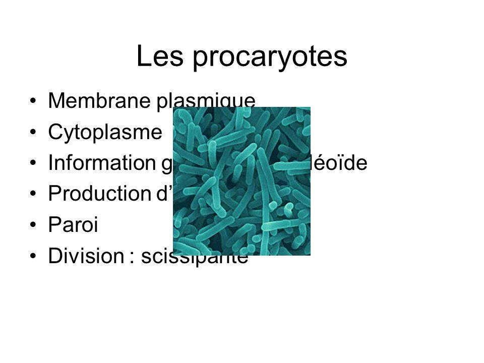 Les procaryotes Membrane plasmique Cytoplasme