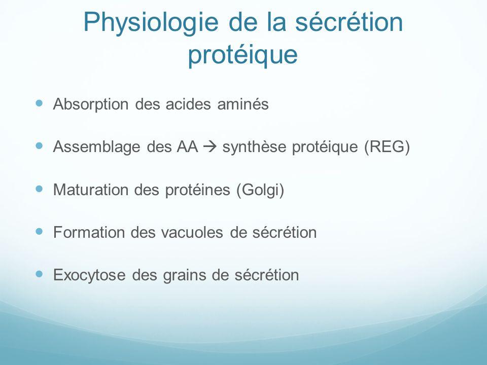 Physiologie de la sécrétion protéique