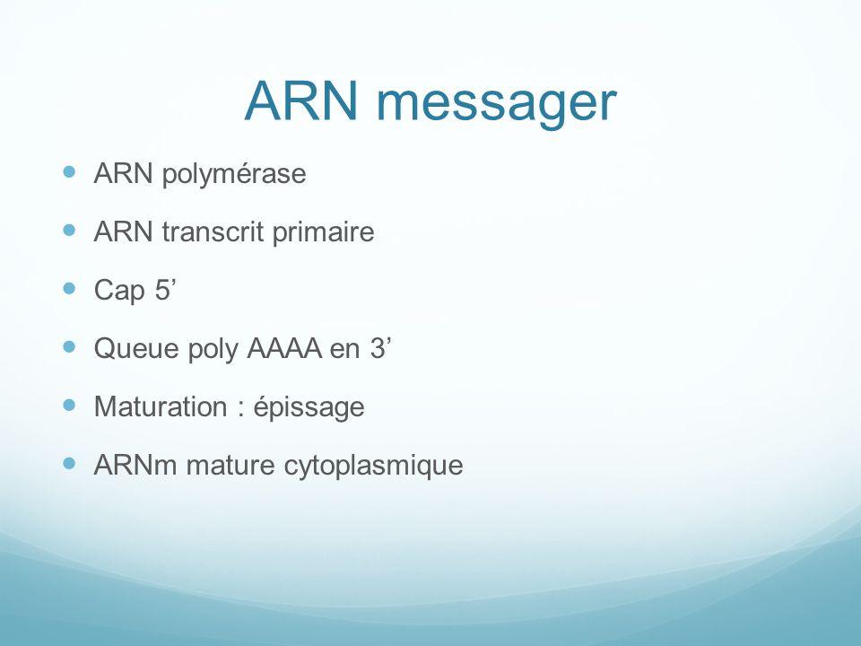 ARN messager ARN polymérase ARN transcrit primaire Cap 5'