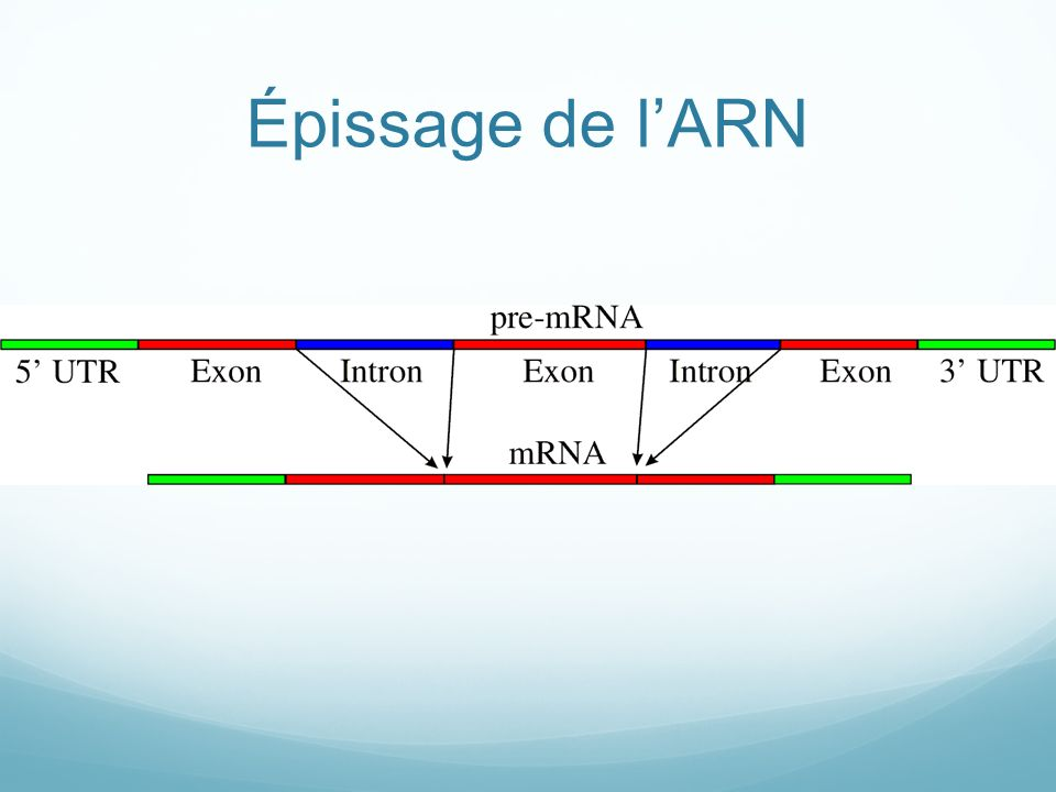 Épissage de l'ARN