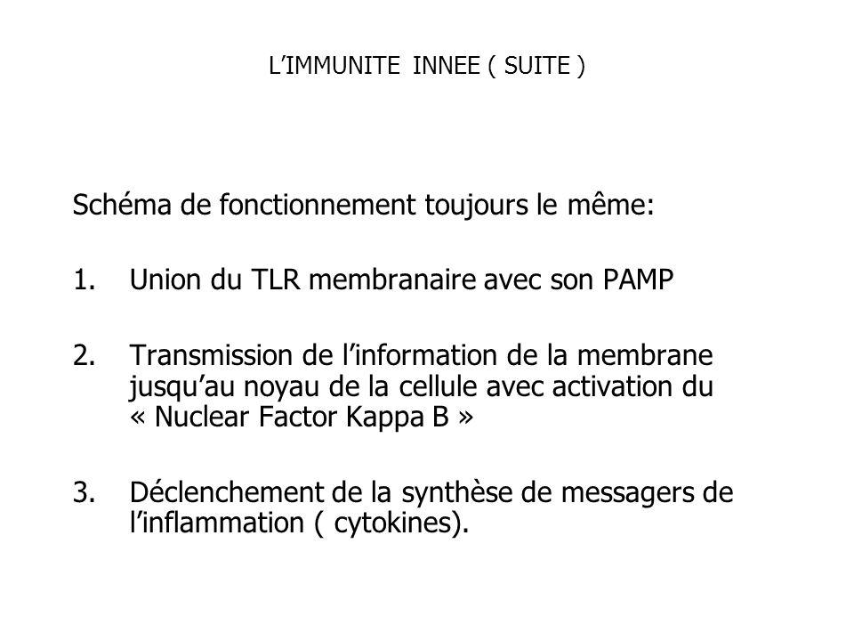 L'IMMUNITE INNEE ( SUITE )