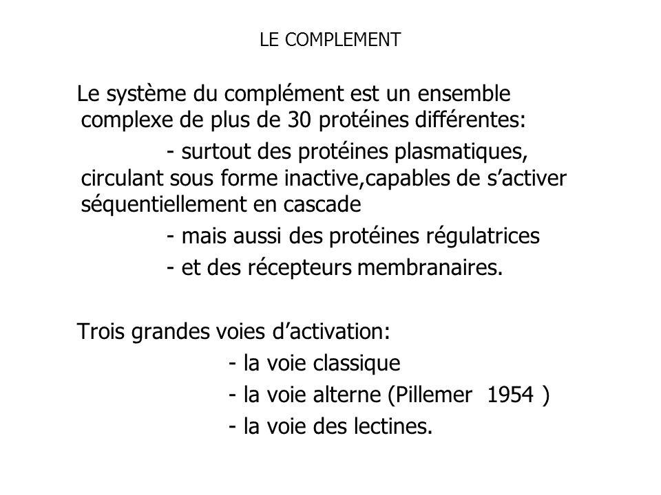 - mais aussi des protéines régulatrices