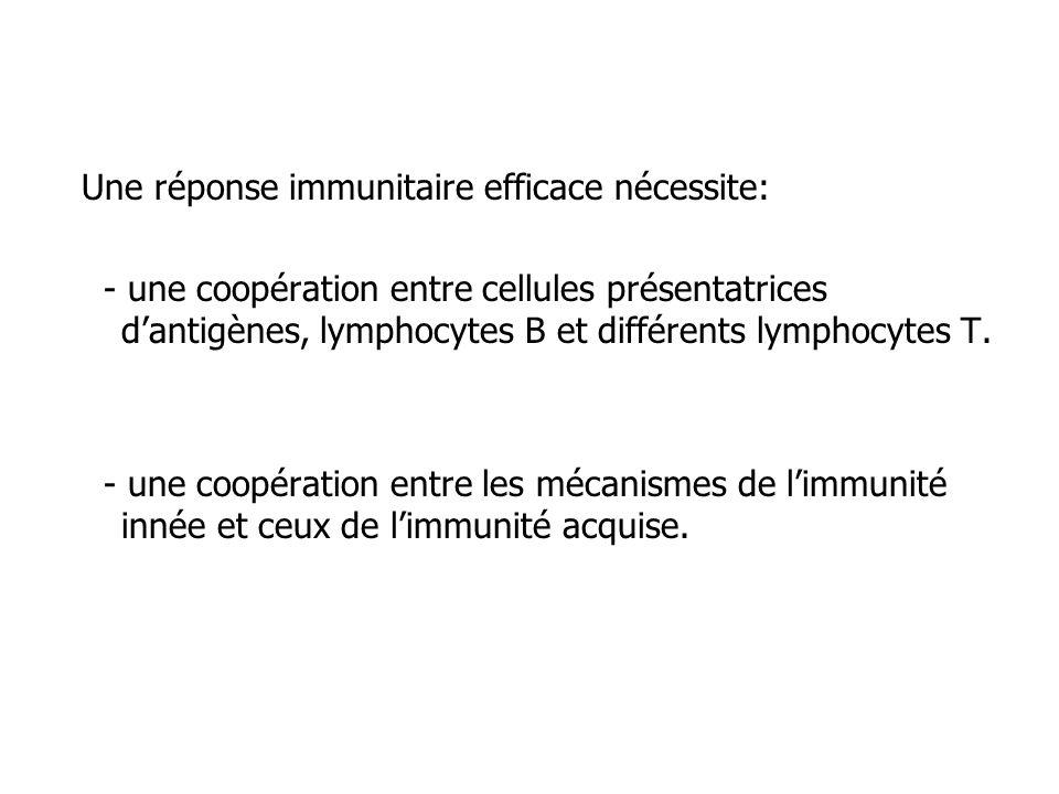 Une réponse immunitaire efficace nécessite:
