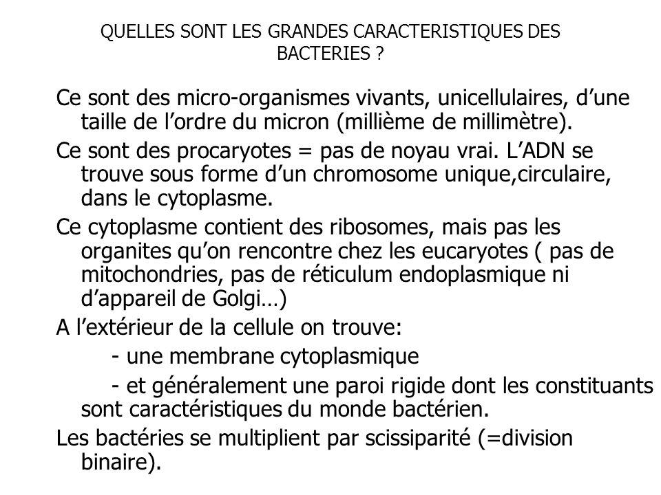 QUELLES SONT LES GRANDES CARACTERISTIQUES DES BACTERIES