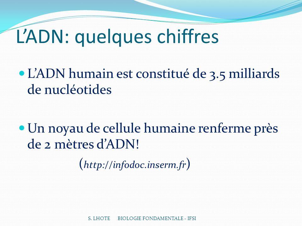 L'ADN: quelques chiffres