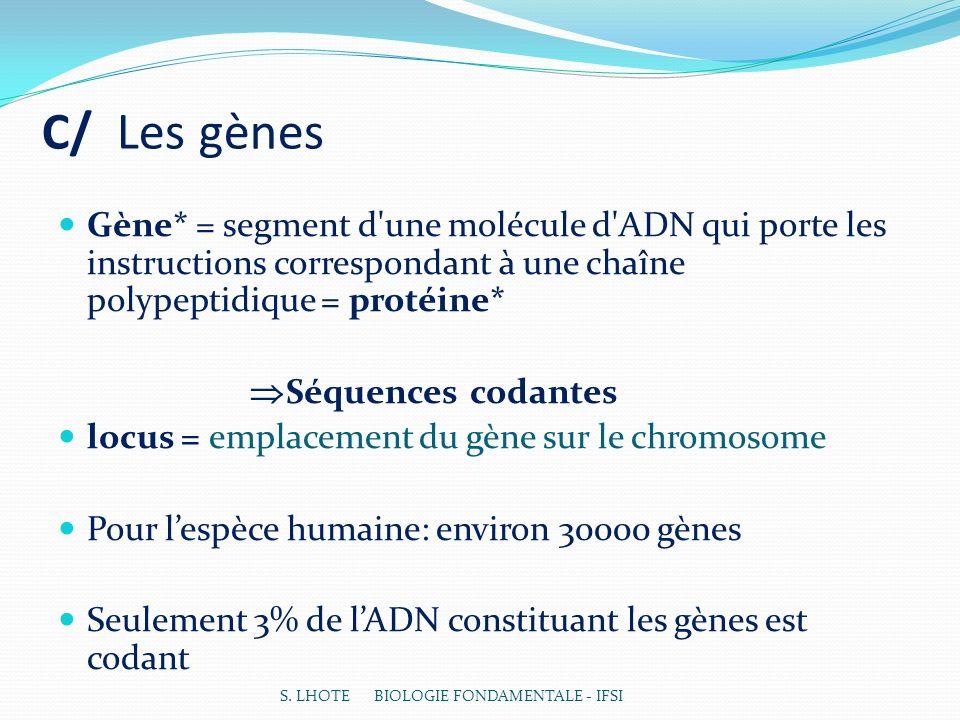 C/ Les gènes Gène* = segment d une molécule d ADN qui porte les instructions correspondant à une chaîne polypeptidique = protéine*