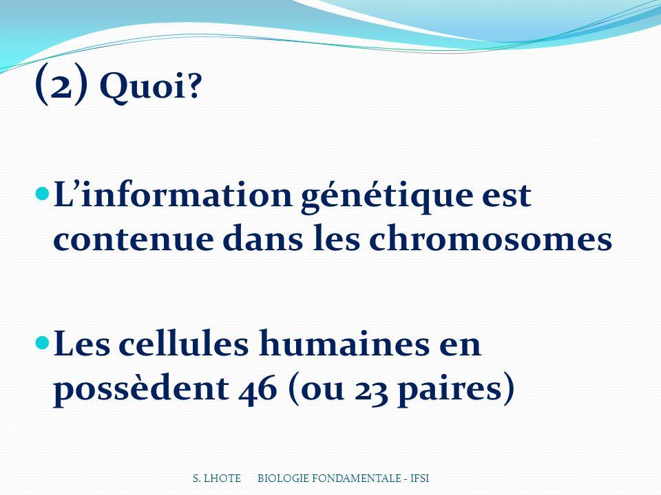 (2) Quoi L'information génétique est contenue dans les chromosomes