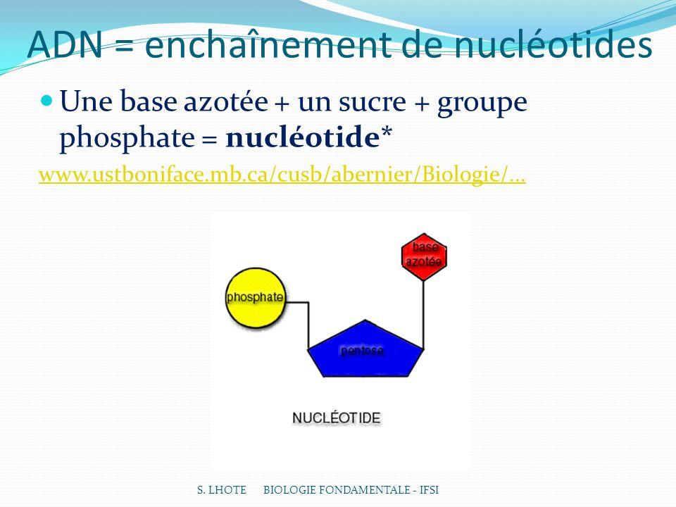ADN = enchaînement de nucléotides