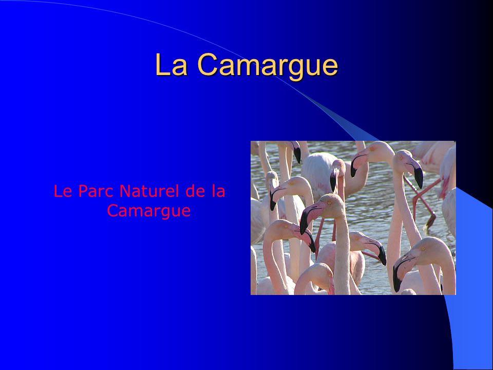Le Parc Naturel de la Camargue