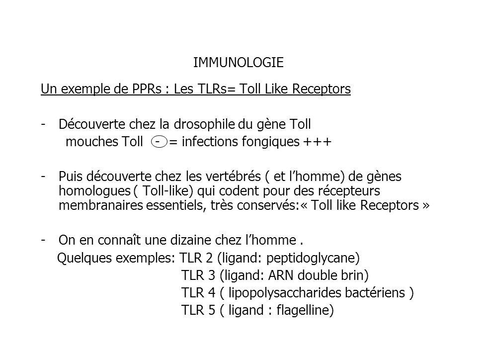 IMMUNOLOGIE Un exemple de PPRs : Les TLRs= Toll Like Receptors. Découverte chez la drosophile du gène Toll.