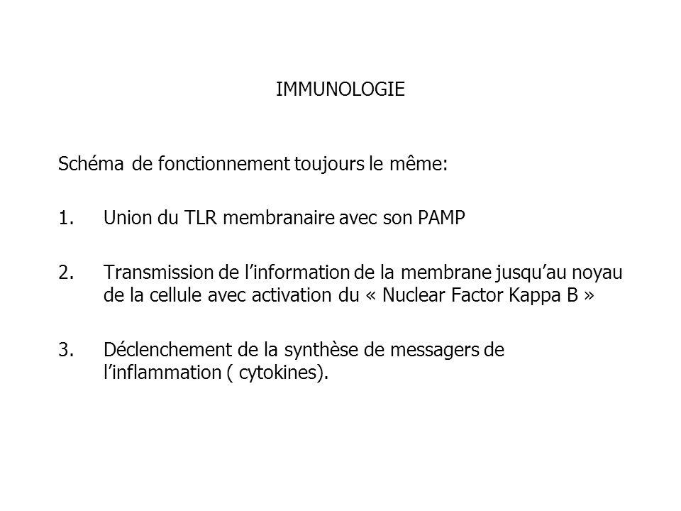 IMMUNOLOGIESchéma de fonctionnement toujours le même: Union du TLR membranaire avec son PAMP.