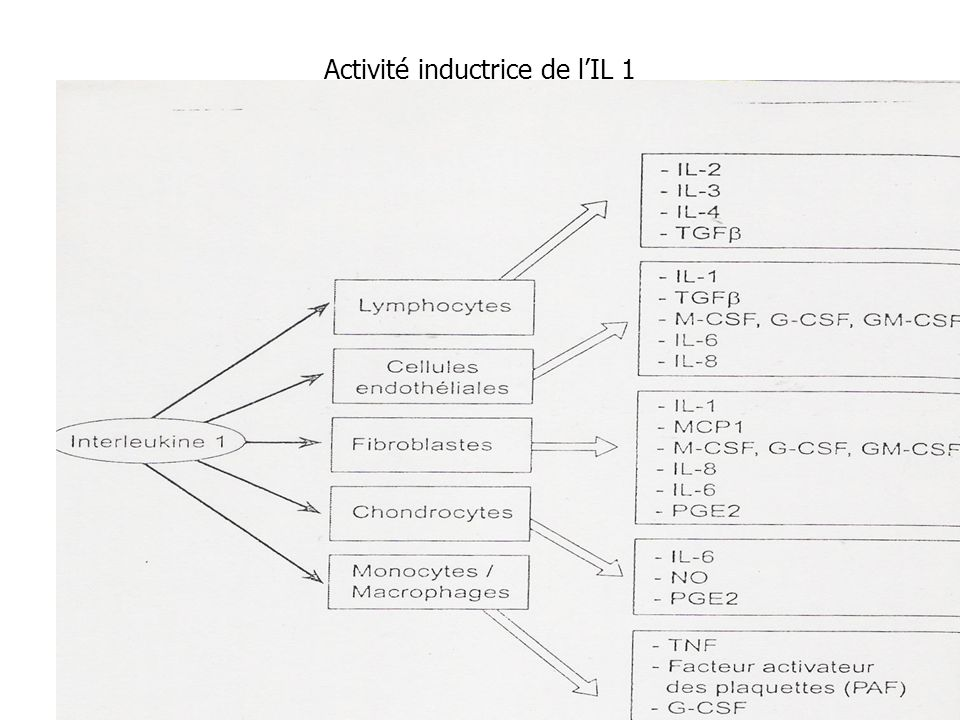 Activité inductrice de l'IL 1