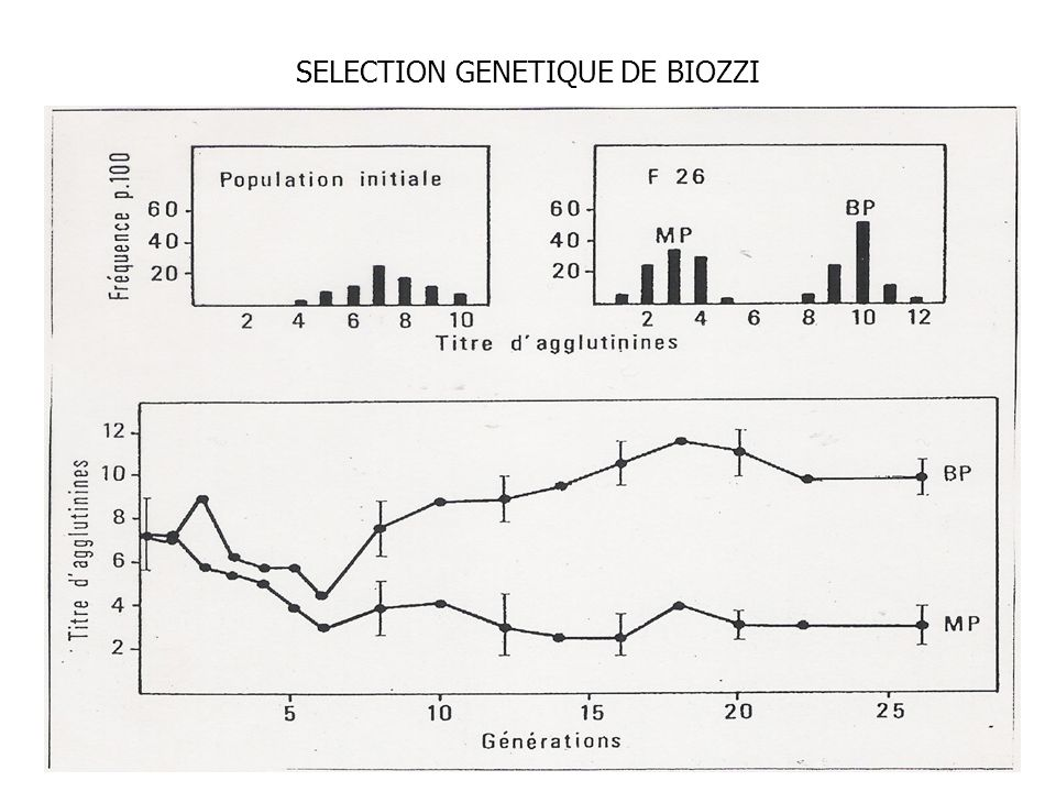 SELECTION GENETIQUE DE BIOZZI