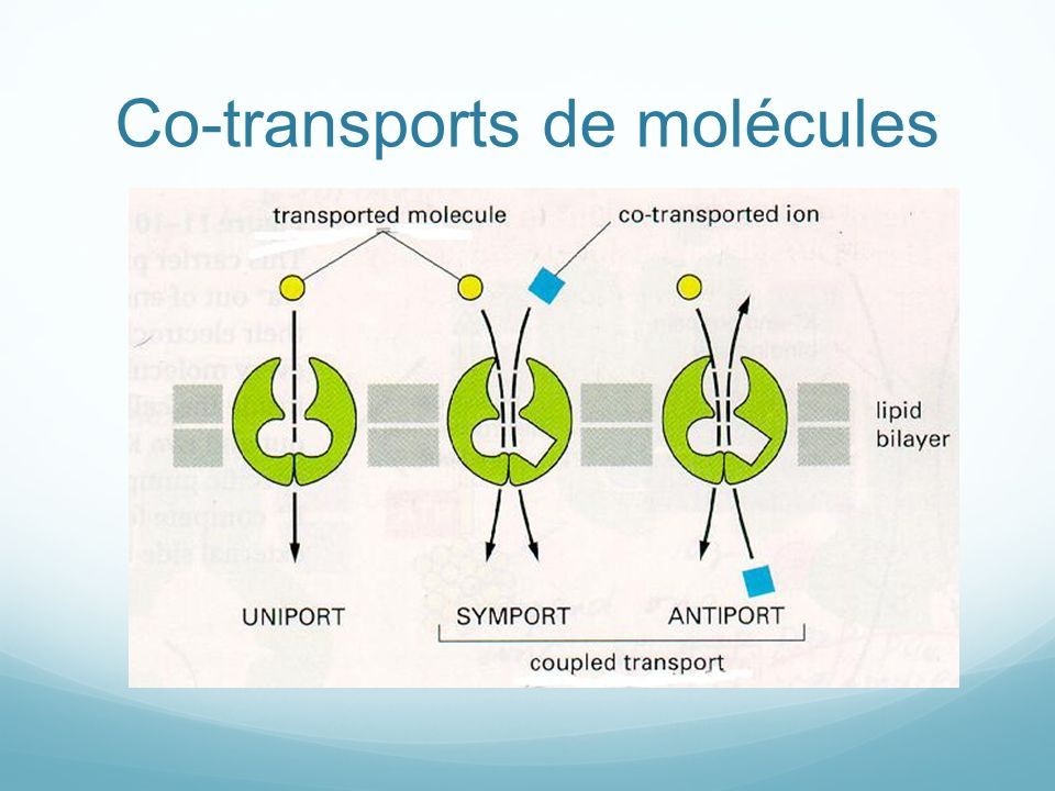 Co-transports de molécules