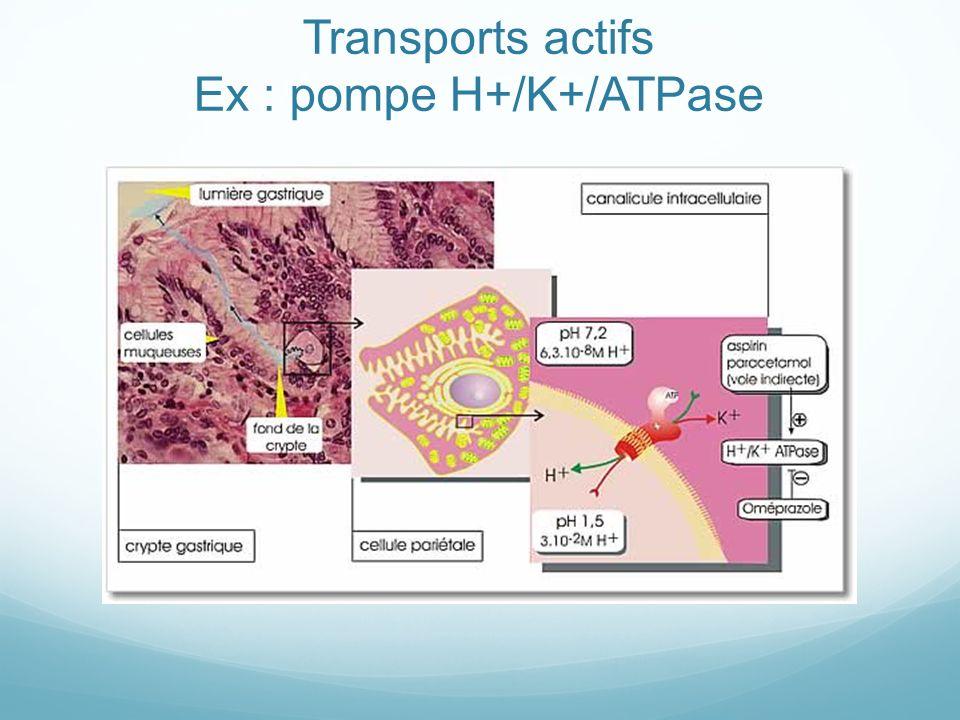 Transports actifs Ex : pompe H+/K+/ATPase