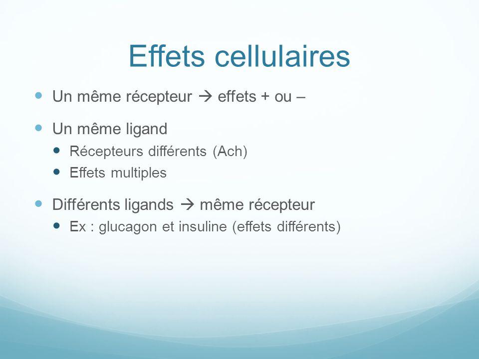 Effets cellulaires Un même récepteur  effets + ou – Un même ligand