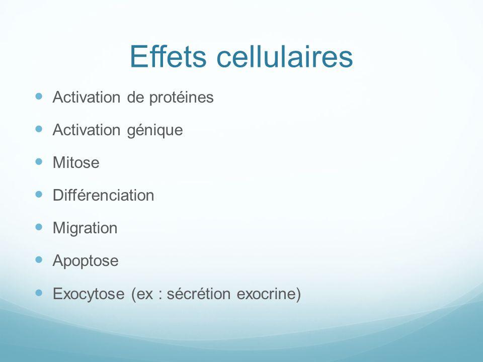 Effets cellulaires Activation de protéines Activation génique Mitose